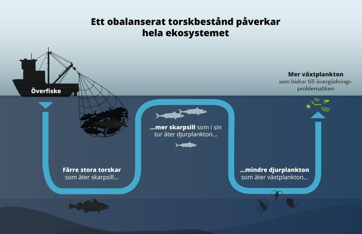 Östersjöns ekosystem i obalans